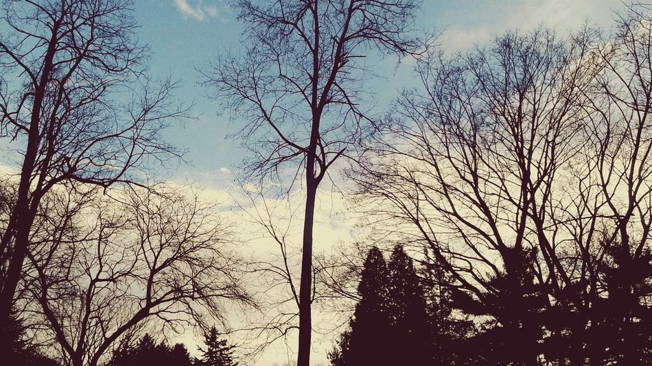 Low Angle View Tree Sky Silhouette Nature Day Branch