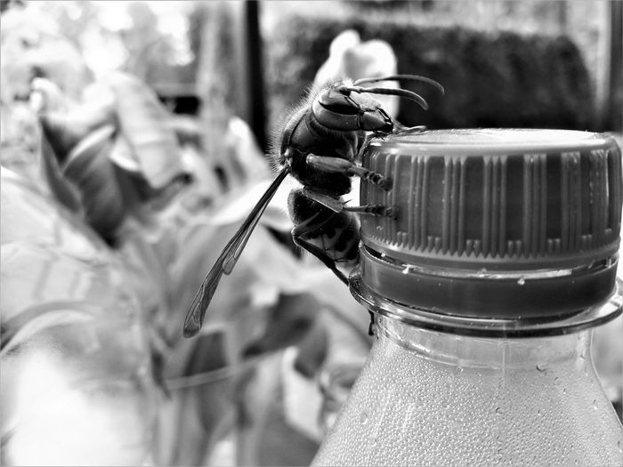 Bottle Close-up Container Day Detail Focus On Foreground Food Food And Drink Freshness Glass - Material Hornisse Indoors  Metal No People Personal Accessory Selective Focus Table Transparent