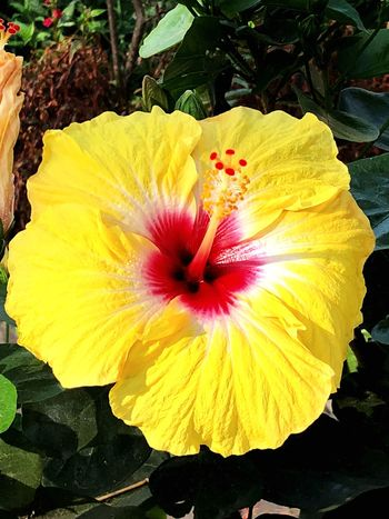 Flower Petal Fragility Flower Head Nature Yellow Beauty In Nature