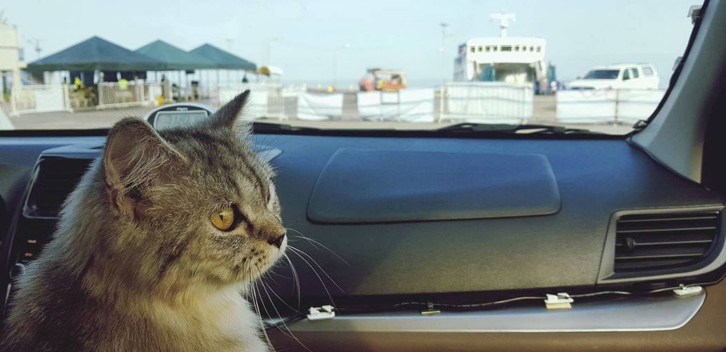 Traveling with pet cat. Travel Travel Destinations Traveling Travel Photography Car Interior Car EyeEmNewHere Eyeem Philippines Cat Cats Of EyeEm Pets Pet Portraits EyeEm Selects Pets Car Close-up Sky Domestic Cat Cat Persian Cat  Kitten