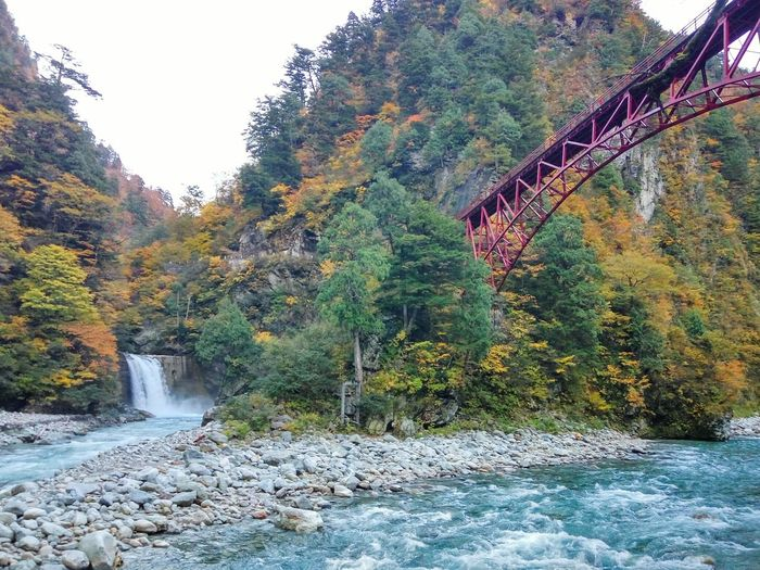 Astonishing Blue River Waterfall River Mountain River Keyakidaira Bridge Japanese Bridge Deep In Japan 黒部峡谷 Kurobe 黒部専用鉄道 Tree Nature Outdoors Beauty In Nature No People Day Growth Green Color Plant Scenics Landscape Water Sky Bridge - Man Made Structure Autumn Forest Tranquility Mountain Waterfront