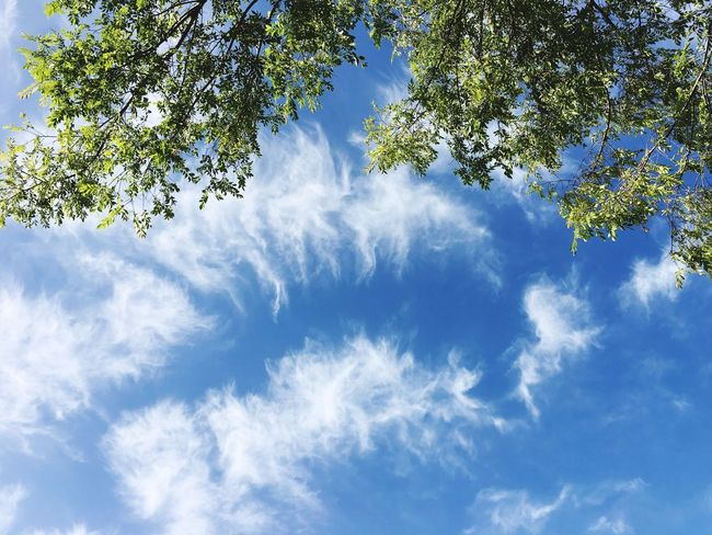 Tree Low Angle View Sky Nature Beauty In Nature Cloud - Sky Day Branch No People Outdoors Growth Blue Scenics Freshness