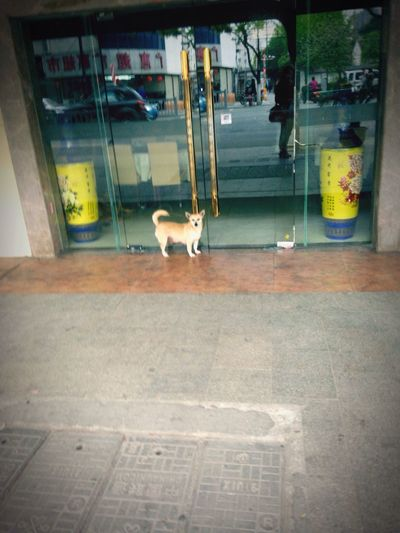 A dog is waiting his master opening the door😂