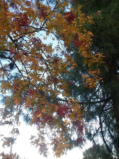 Trees Leaves Colors Autumn Colors East Bay Daytime Outdoors Scenic Backgrounds Patterns Red Gold