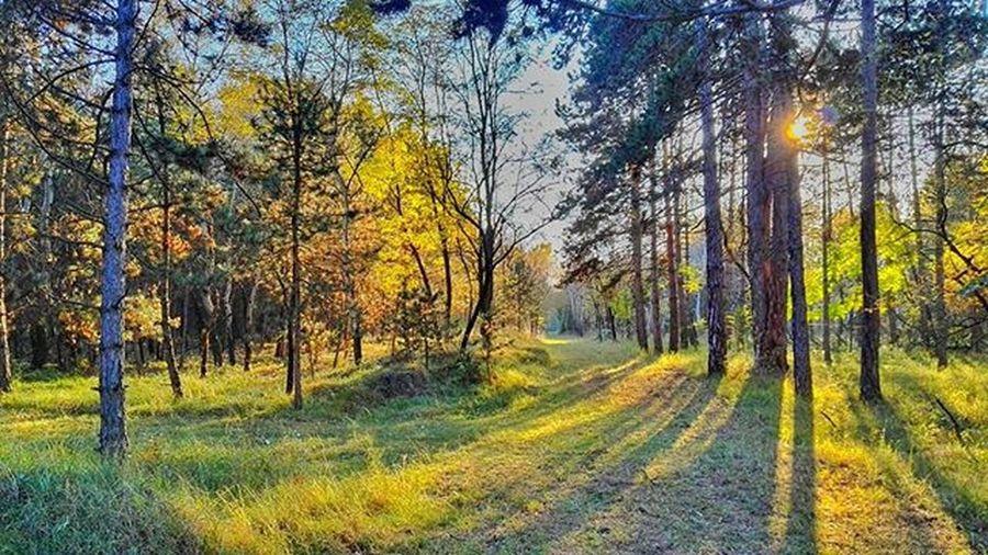 Umcollective Mik Ikozosseg Loves_hungary bokeh_kings vscohungary vzcohungary tree_captures EyeEmNewHere