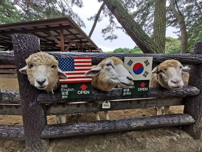 Pets Sheep Dog