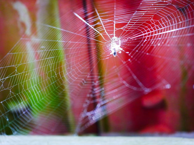 Animal Animal Leg Animal Themes Animal Wildlife Animals In The Wild Arachnid Arthropod Close-up Complexity Concentric Day Focus On Foreground Fragility Insect Invertebrate Nature No People One Animal Outdoors Selective Focus Spider Spider Web Spiderweb Vulnerability  Web