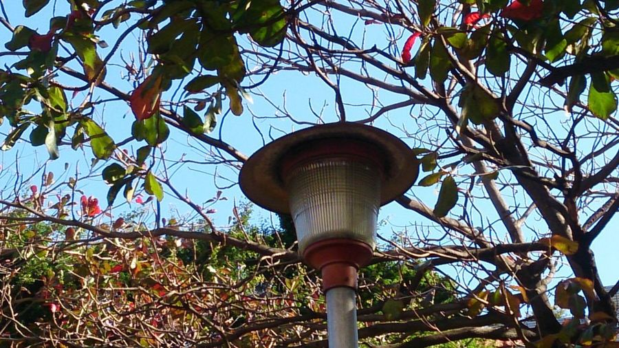 Tree Lighting Equipment Sky Branch Growing Street Light Woods Pole Gas Light Tree Trunk