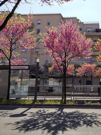 Shadows Sunlight, Shades And Shadows Street Photography Flower Tree Sky Architecture Building Exterior Blooming In Bloom
