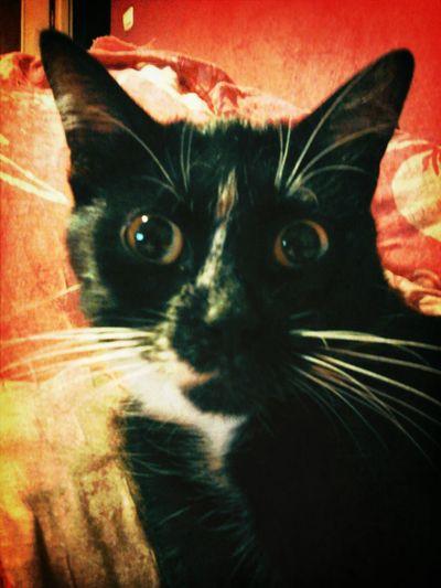 Cat Animals Taking Photos Hello World