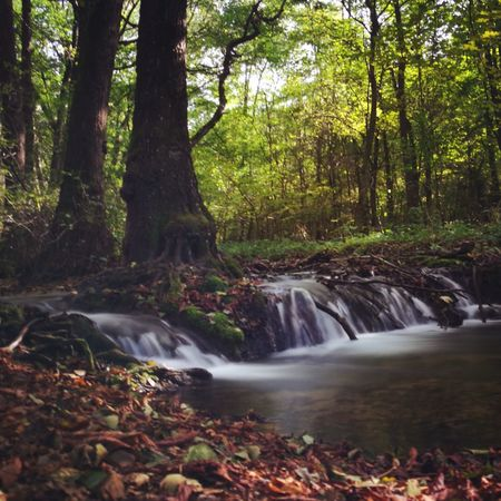 Landscape Forest Water Flowing Water Nature Waterfall Stream Tree Long Exposure Beauty In Nature WoodLand Outdoors Longexposure Forest Tree Motion Water Flowing Water Waterfall Stream Scenics Flowing Nature Long Exposure Beauty In Nature Tree Trunk First Eyeem Photo