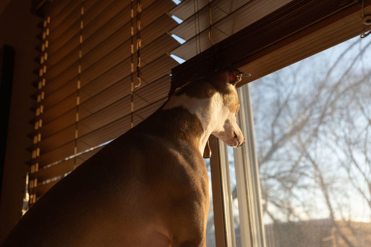 Close-up of dog looking through window