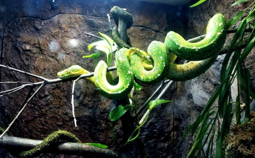 Reptile Green Color Nature Fresno Zoo Vacations Zoo Animals In Captivity