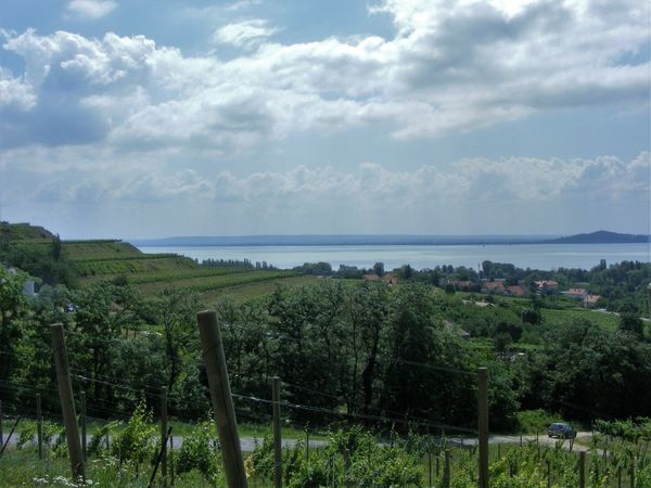 Having a look from Villa Sandahl to Badacsony Research institute lands :) Badacsony Wine Region Beauty In Nature Enjoying Life First Eyeem Photo Idyllic Kéknyelű Lake Balaton Landscape Terraces Vineyard Viticulture