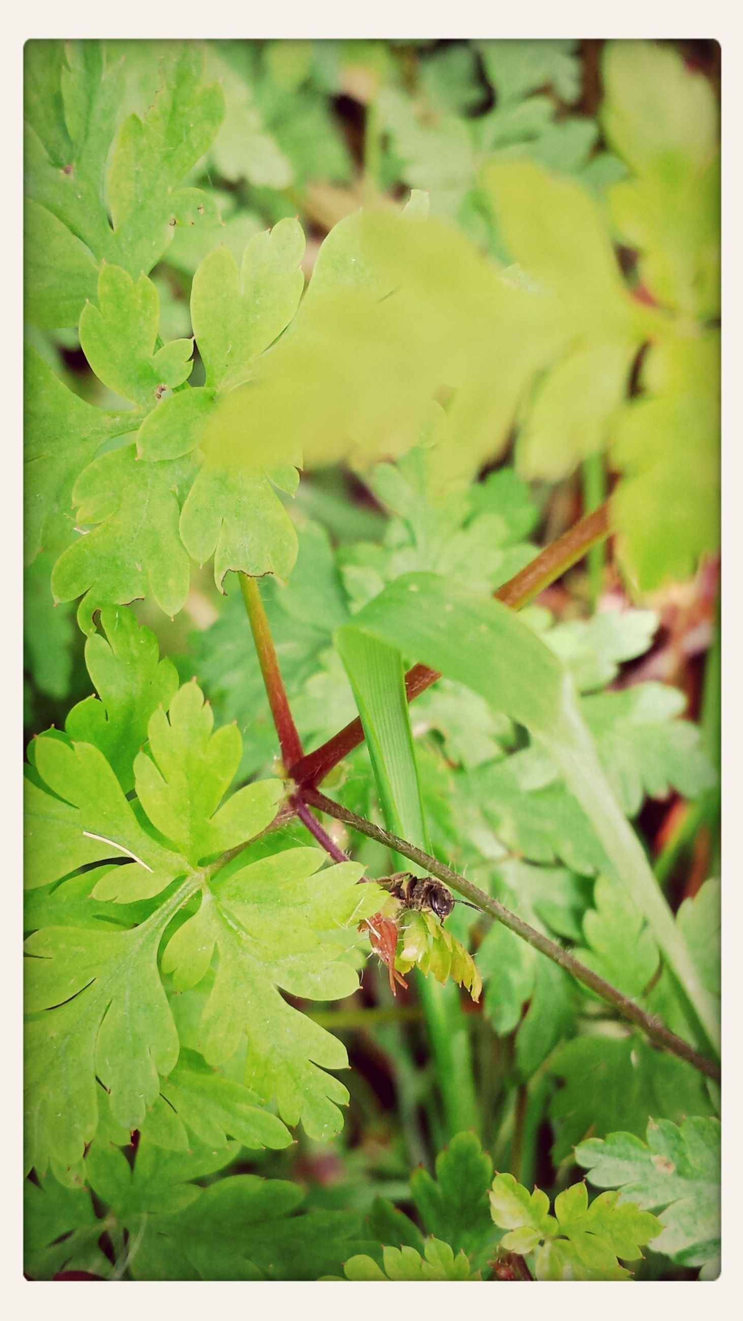 transfer print, leaf, green color, auto post production filter, growth, nature, plant, leaves, close-up, beauty in nature, high angle view, day, tranquility, outdoors, no people, green, selective focus, freshness, water, sunlight