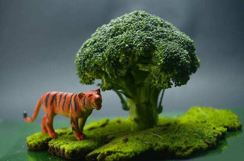 miniature theme Miniature Toy Broccoli Vegetable Moss One Animal Animal Wildlife Green Color No People Day Grass Animal Themes Nature Close-up Outdoors Mammal
