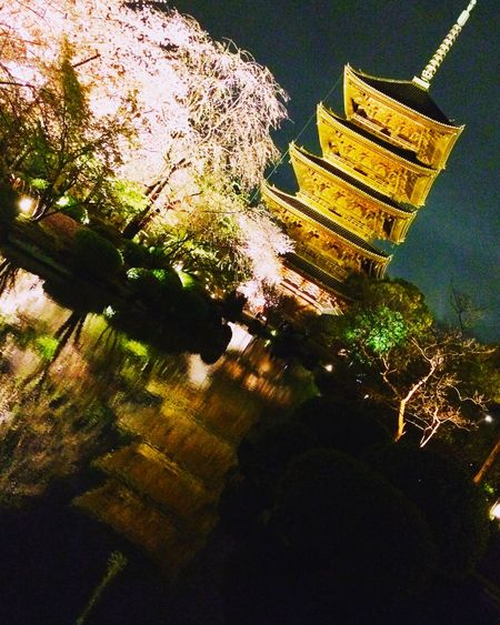 東寺 Kyoto Japan Temple Toji Temple Cherry Blossoms Hanami Five-storied Pagoda Japanesebeauty