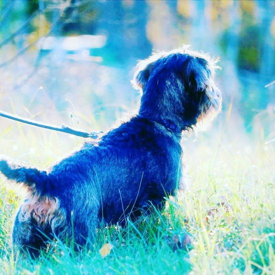 Dog Pets Domestic Animals One Animal Animal Themes Mammal Grass No People Day Full Length Outdoors Pet Collar Sitting Nature Close-up