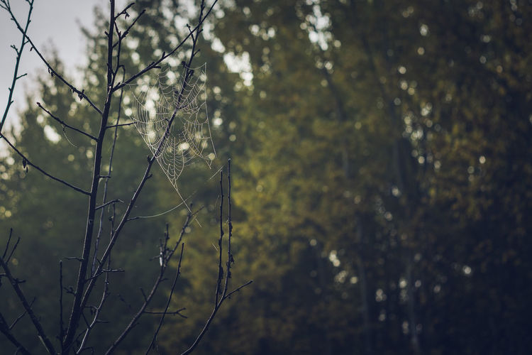 Spider Web in
