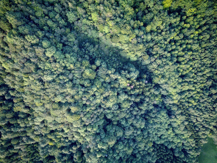 Drone  Enjoying The View Green HDR Trees Zürich Beauty In Nature Birdseyeview Dji Dronephotography Full Frame Mavic Nature No People Outdoors üetliberg