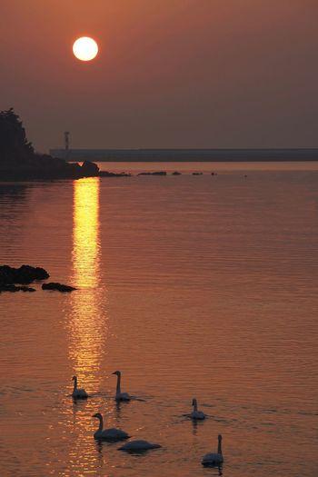 Swan Water Sky