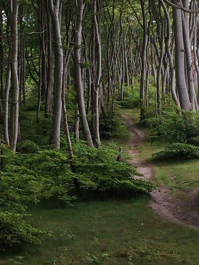 TreePorn EyeEm Best Shots - Landscape Iphonephotography EyeEm Nature Lover Tree EyeEm Best Shots - Nature Malephotographerofthemonth My Best Photo 2015