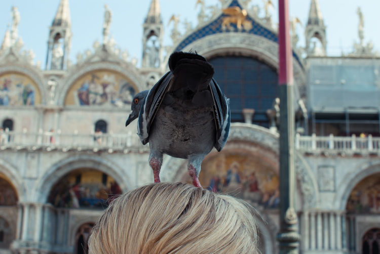 Close-up of pigeon on woman head against st marks cathedral