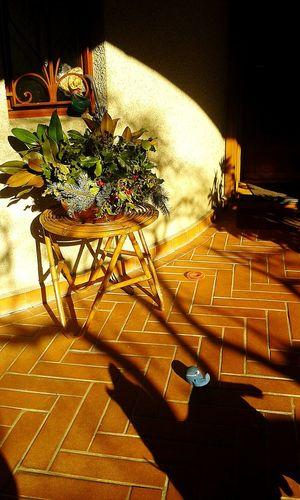 Dog Light And Shadow Sunny Day I Love My Dog