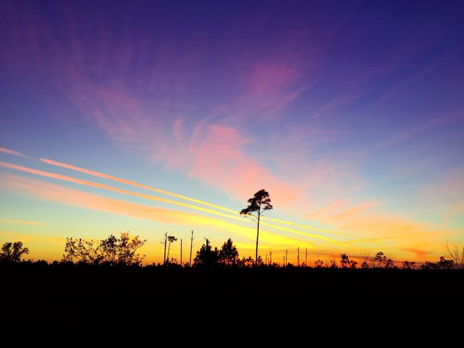 Sunset Silhouette Nature Beauty In Nature Tree Scenics Sky No People Tranquility Landscape Outdoors Blue Low Angle View Day The Week On EyeEm EyeEm Best Shots Tranquil Scene Gulf Shores, AL