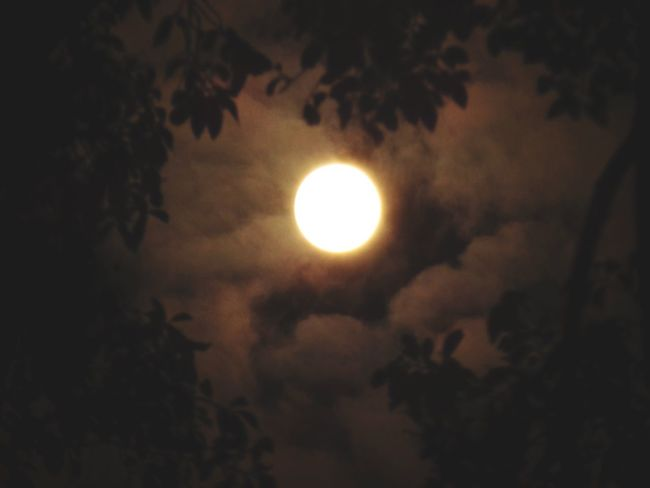 The best moon I could capture.🌕🌕 Nature Sky Tranquility Outdoors Moon Framed Leaves Trees Home EyeEm Best Shots Nightphotography Samsung Galaxy Camera 21x Love My IPhone