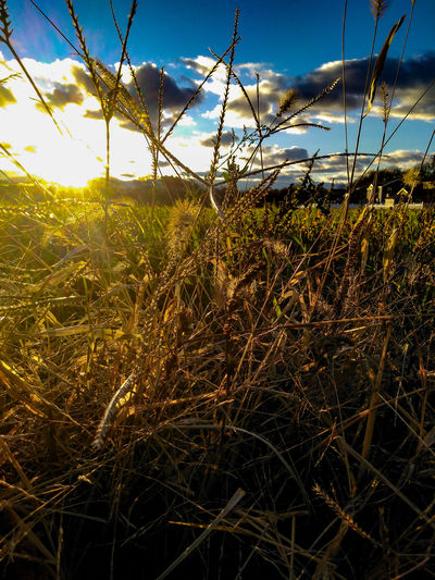 Sunshine Nature Sky Cloud - Sky Outdoors Day Grass Close-up Beauty In Nature Sunlight Freshness Grass EyeEm Selects