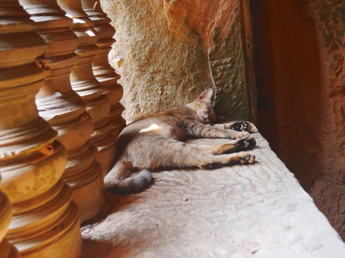Cat Sleeping On Wall At Angkor Wat