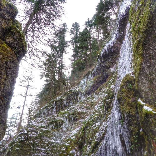 Iceicles everywhere! Oneanta Gorge Columbia River Gorge EyeEm Nature Lover