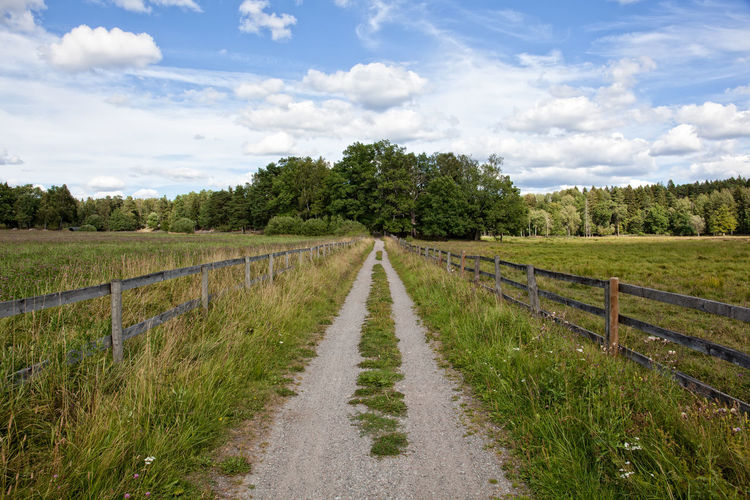 Road to Swedish forest during the summer. Day Grass Green Color Landscape Leading Lines Nature No People Nordic Countries Scandinavia Stockholm Stockholm, Sweden Summer Sweden The Way Forward Tranquil Scene Tranquility Tree