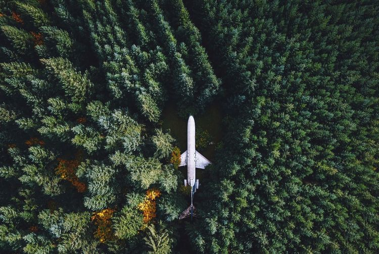 Tree Growth Nature No People Beauty In Nature Day Outdoors Airplane Out Of The Box Perspectives On Nature Perspectives On Nature