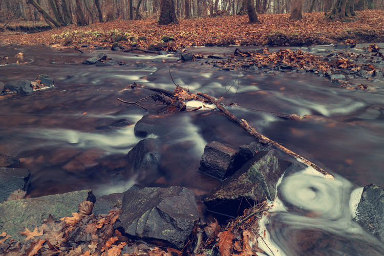 River in the forest in autumn. Art Beauty In Nature Backgrounds Water Nature Plant Part No People Rock Leaf Land Day Forest Tree Solid Rock - Object Tranquility River Outdoors Non-urban Scene Wood - Material Stream - Flowing Water Leaves