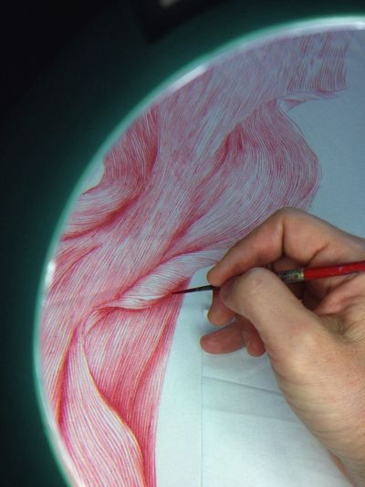 Drawing a spider lily petal. dye on silk. Art Artist Flower