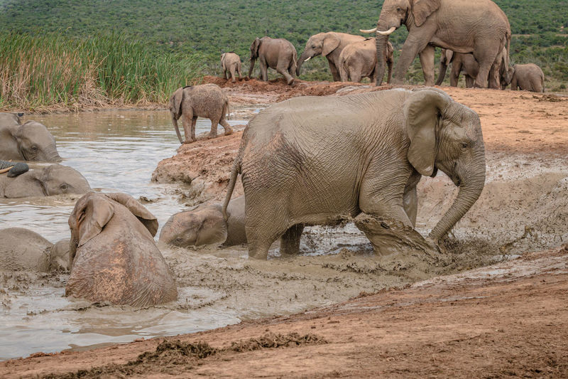 View of elephant drinking water