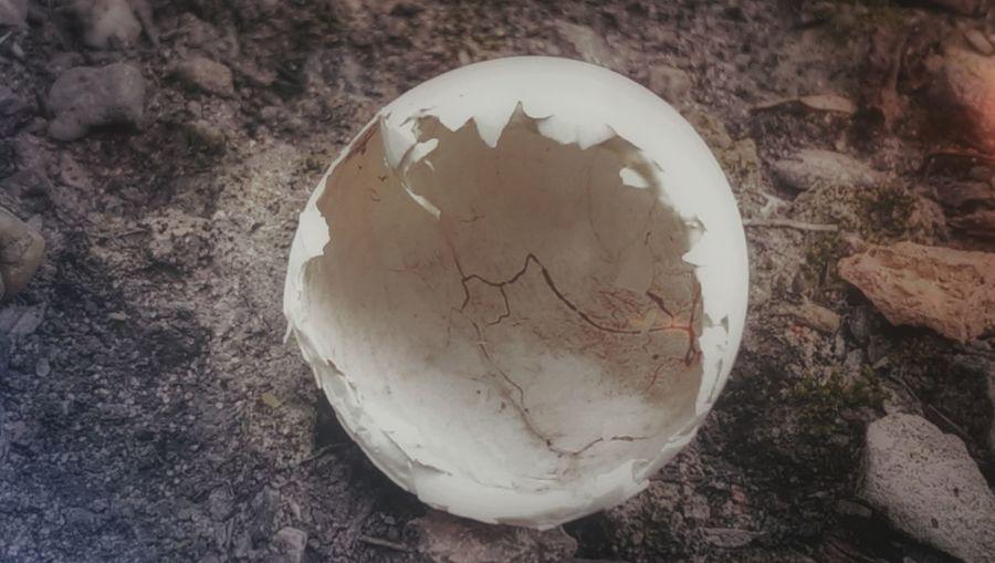 New Life Nature Egg