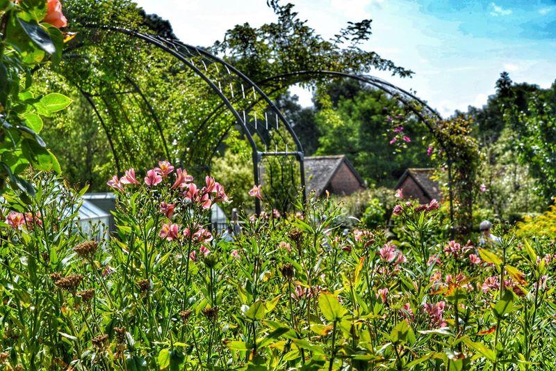 View of flowers in garden
