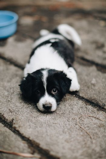 Dog Puppy Selective Focus Animals Domestic Pets Pets Mammal Cute Young Animal Outdoors Focus On Foreground Laying Down Close-up