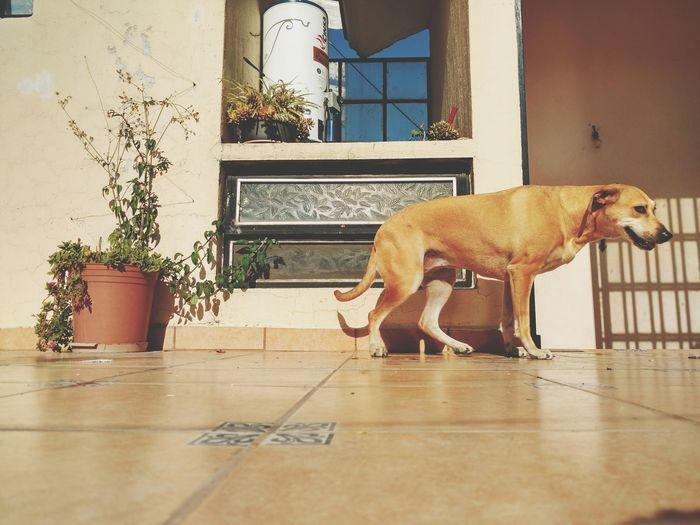 Dog standing on tiled floor against building