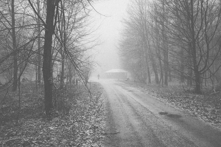 The fog and the woods. Wallacianism Wood Bare Tree Beauty In Nature Blackandwhite Cold Temperature Day Forest Landscape Mist Moody Atmosphere Nature No People Outdoors Road Sky Snow Spooky The Way Forward Transportation Tree Winter The Street Photographer - 2018 EyeEm Awards