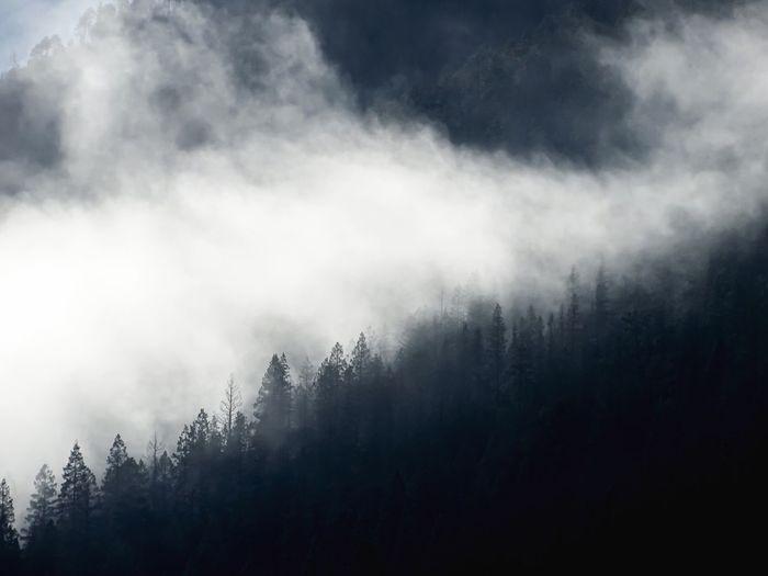 fog creeping up