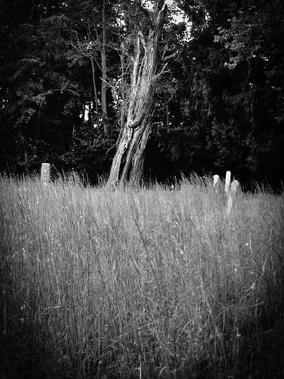 Nature Growth Tree Grass Tranquility Outdoors Scenics Tranquil Scene Cemetery_shots Cemetery Quaker Cemetery Secluded  Blackandwhite Black & White Blackandwhite Photography Black And White Photography Blackandwhitephotography Black&white