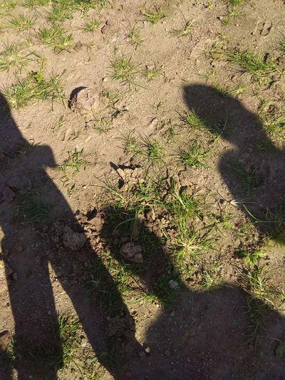 Shadows of