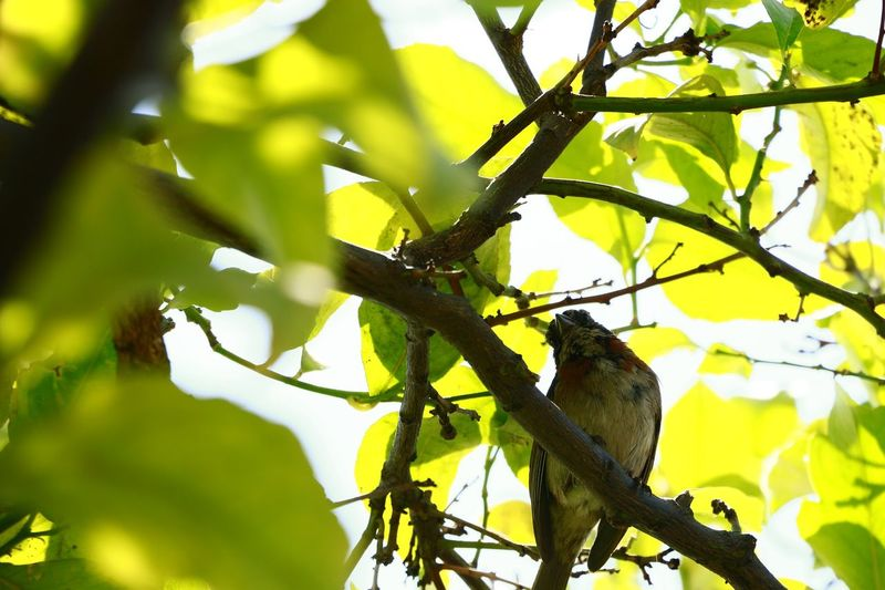 Exploring Style Bird At The Tree Bird Nature Green Color Green Lemon Tree Green Leaves Yelllow Leaves Resting Bird Resting Branch Day Close-up Nature Friend Look Morning With Sun Beauty In Nature No People Paying Attention Trying To Talk