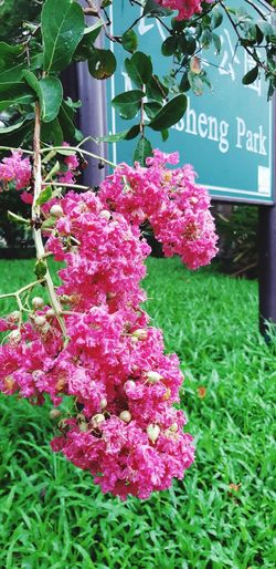 Flower Communication Text Close-up Plant Green Color Signboard Blooming Street Name Sign Information Sign In Bloom