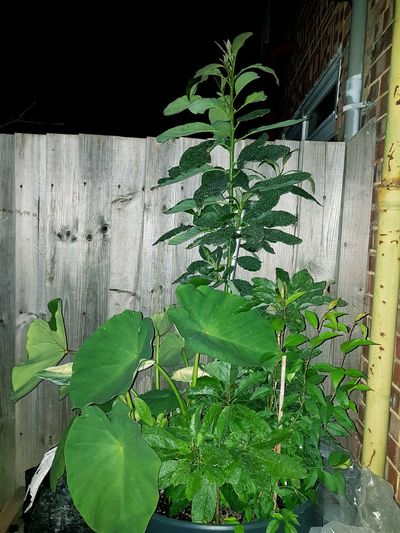 my little Amazon Leaf Close-up Plant Green Color Plant Life Leaves Growing Young Plant Stem