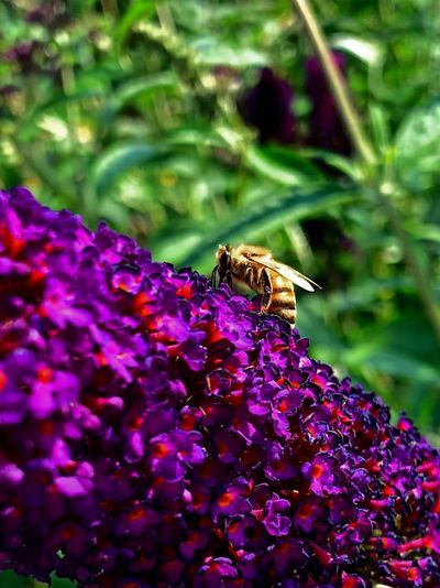 Bee in my
